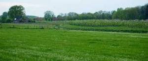 Platteland, boerderij in de verte