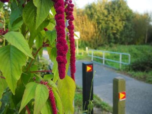 knopenlopen - wandelen in Limburg