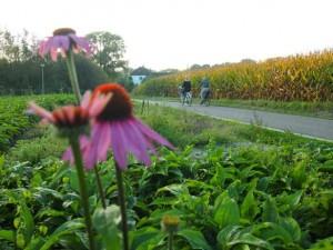Fietsen in Limburg - platteland - fietsknooppunten