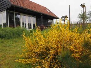 natuur bloemen platteland limburg